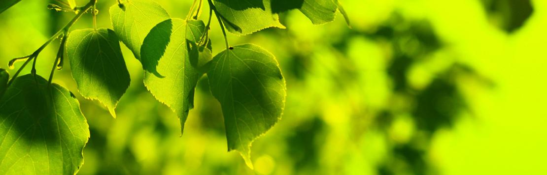 Bild gröna löv
